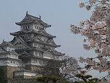 Himeji linna ja kirsikankukkia